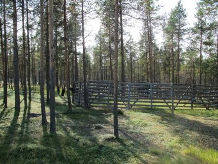 cage-for-reindeers-jpg