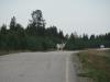 white-reindeer-jpg